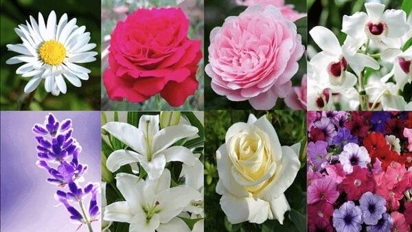Những loại hoa thường được dùng trang trí các mẫu bánh kem đám cưới